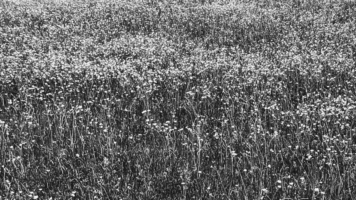 Pessoa: flores do Abril